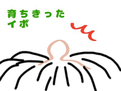 f:id:awawako:20170127152557p:plain