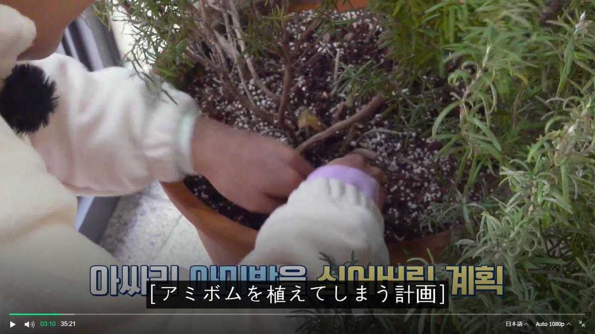 f:id:awawako:20210331073535j:plain
