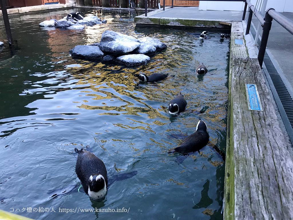 至近距離でペンギンを見ることができる