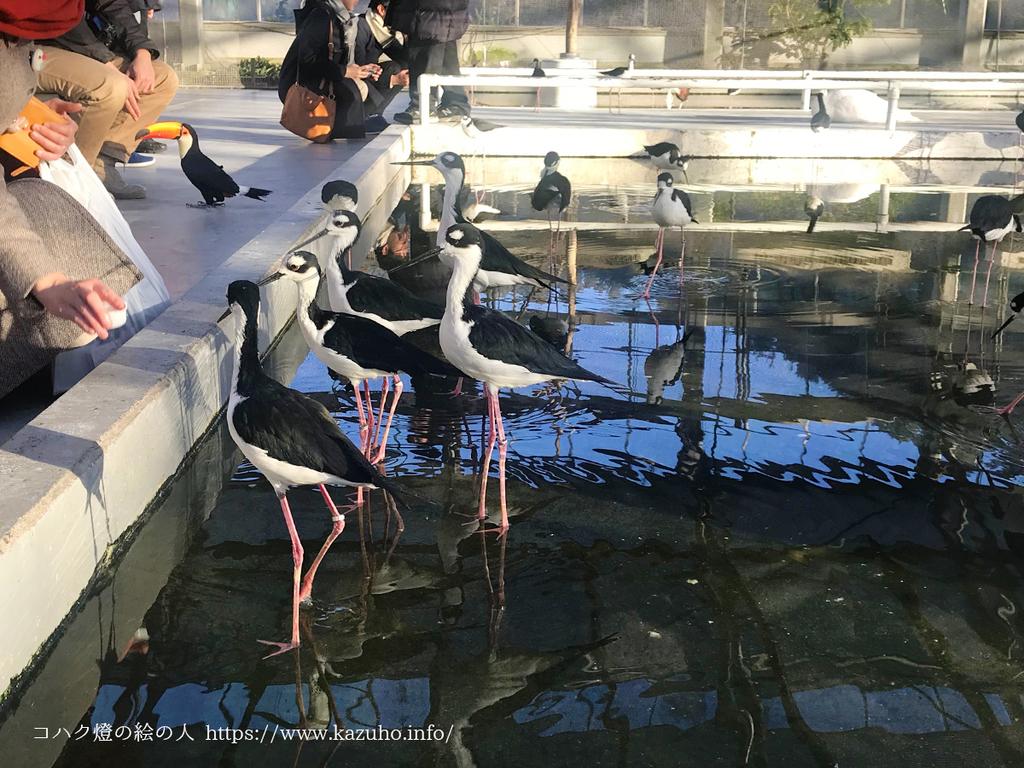 水鳥たちに餌をやり、触れ合うことができる