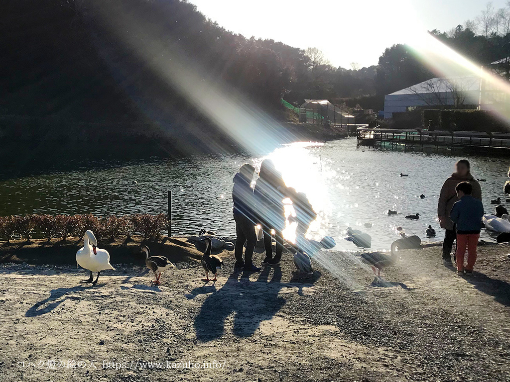 屋外の池の水鳥たち