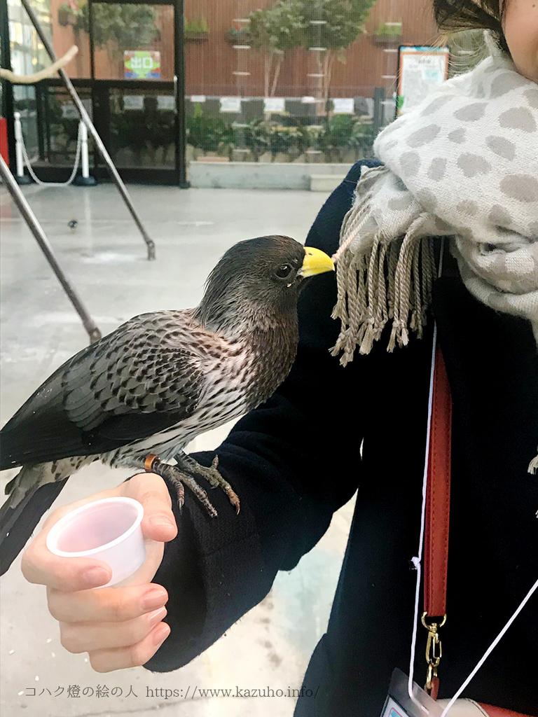 腕にとまった鳥にマフラーのフリンジを引っ張られる