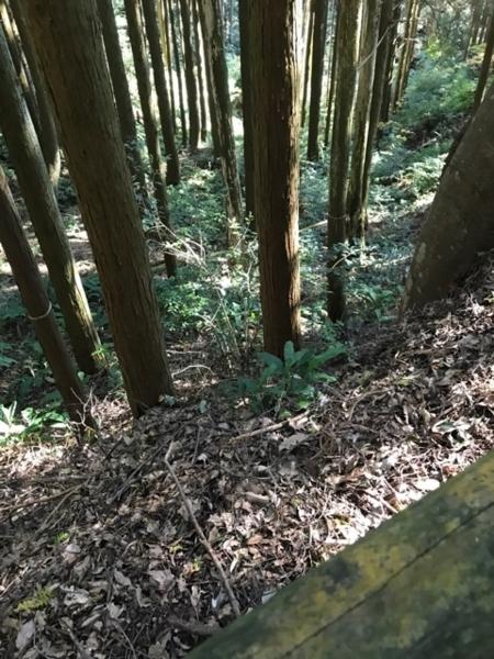 f:id:aya-haseko:20171111070611j:plain