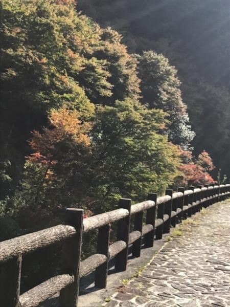 f:id:aya-haseko:20171114221832j:plain