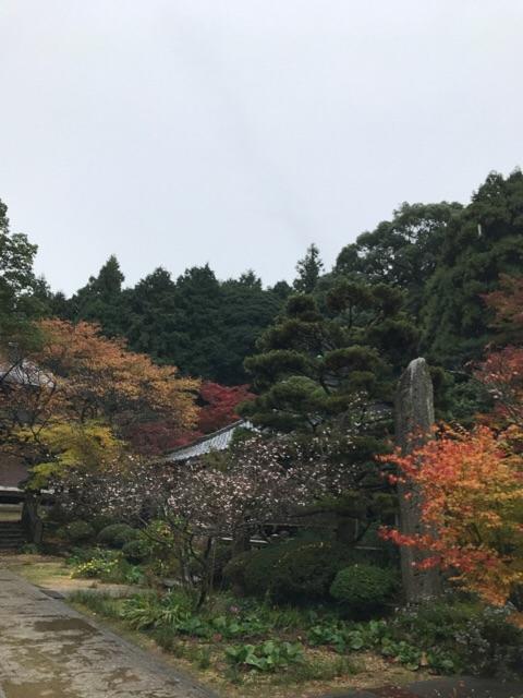 f:id:aya-haseko:20171129101049j:plain
