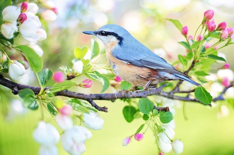 spring-bird