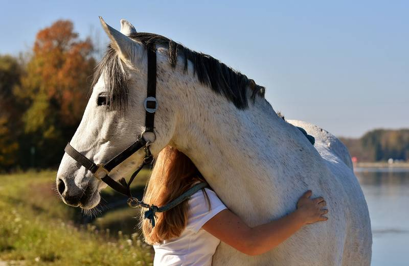 girl_and_horse