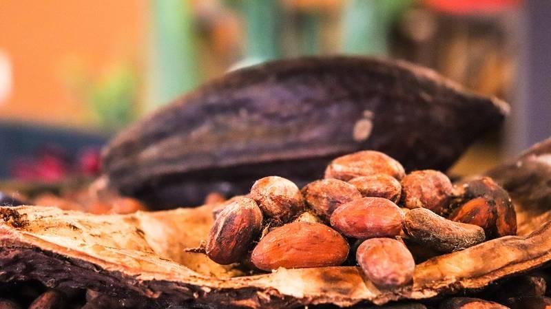 cacao-cocoa