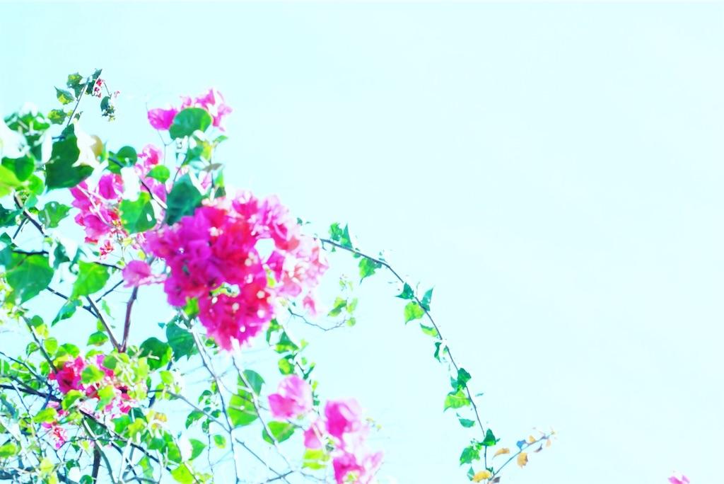 f:id:ayachantokyo:20190109224250j:image