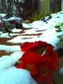 [植物][雪]