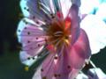 [植物][花]