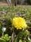[花][植物]