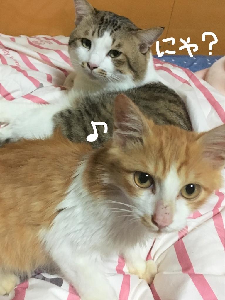 f:id:ayafumi685:20181111185619j:plain