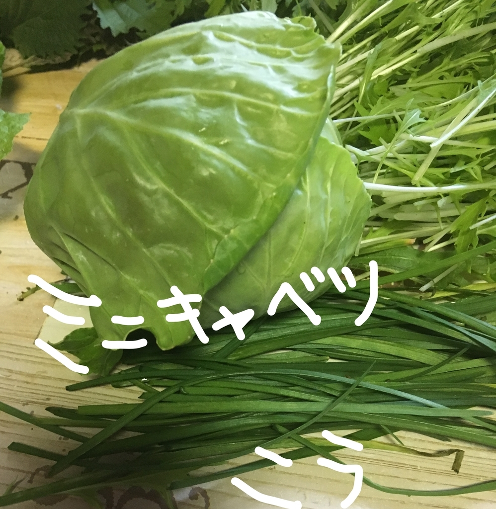 f:id:ayafumi685:20181205205006j:plain