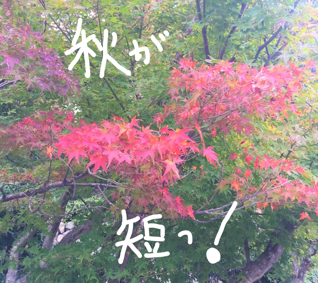f:id:ayafumi685:20181211230654j:plain