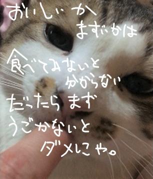 f:id:ayafumi685:20190118022041j:plain