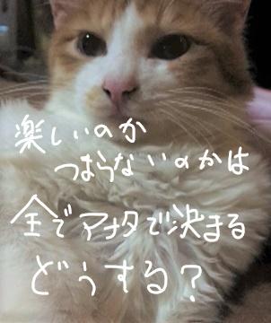 f:id:ayafumi685:20190118024357j:plain