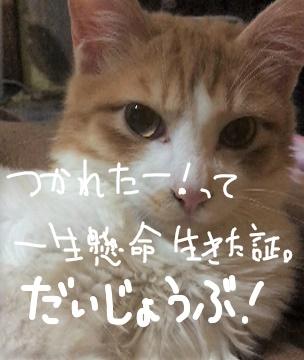f:id:ayafumi685:20190118025335j:plain