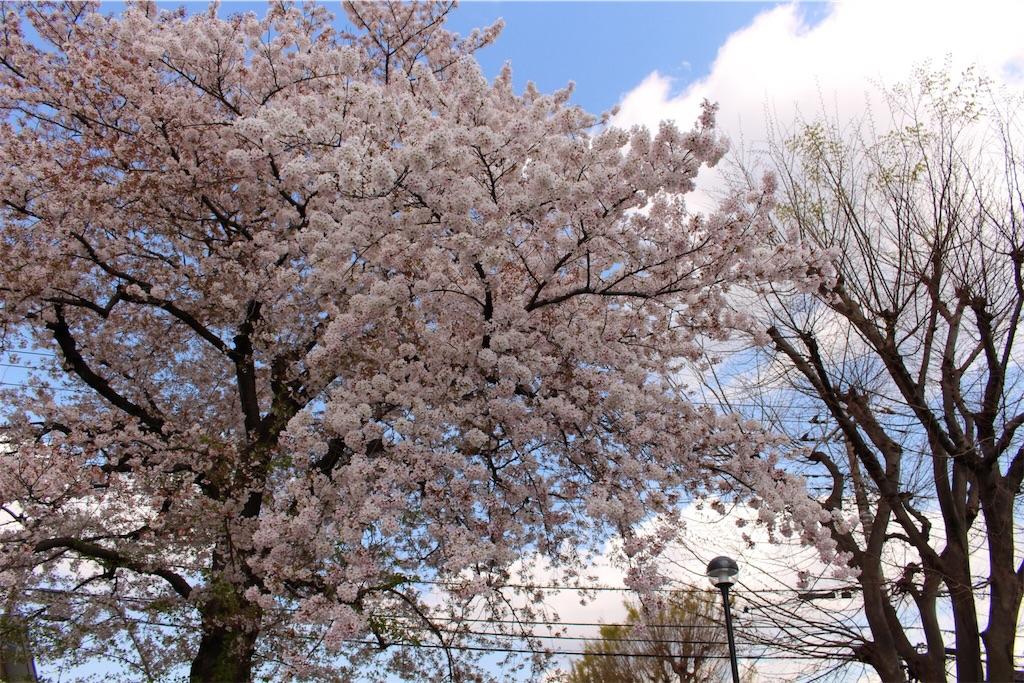 f:id:ayaka_potsunen:20170417222312j:image