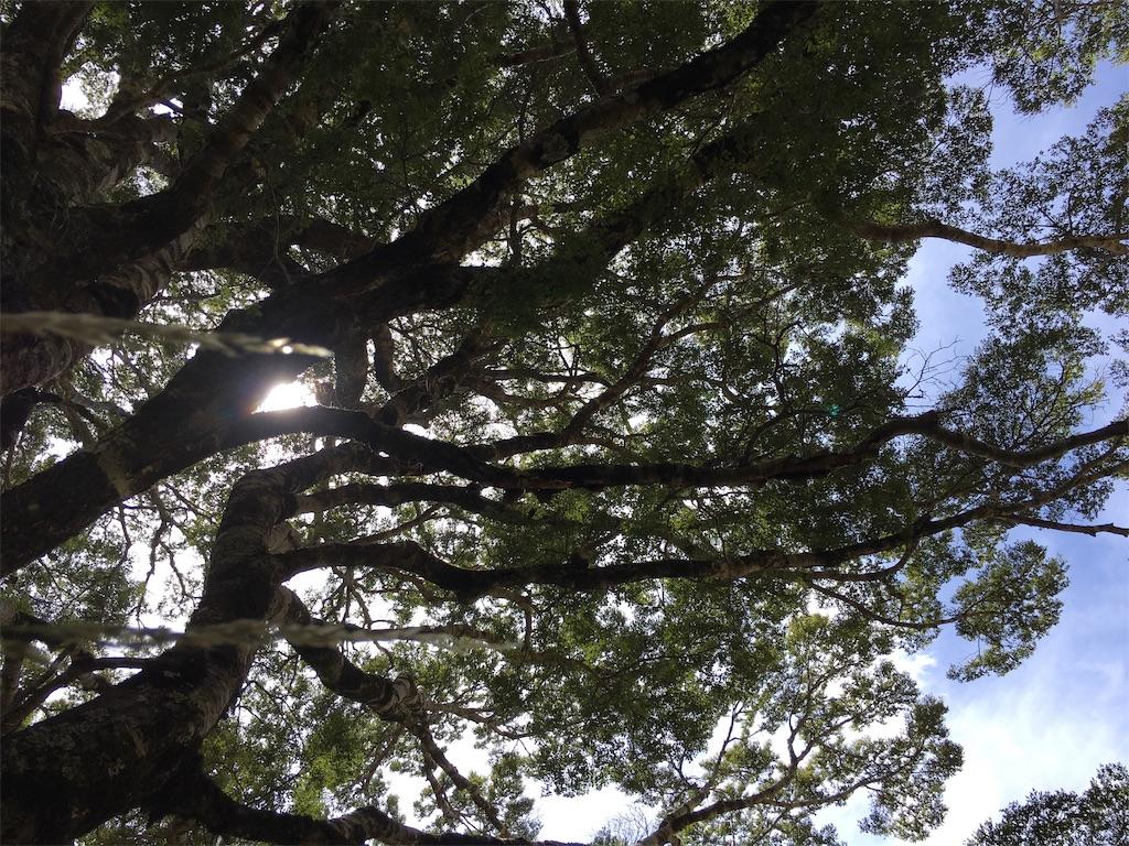 f:id:ayako-sundries:20190126164052j:image