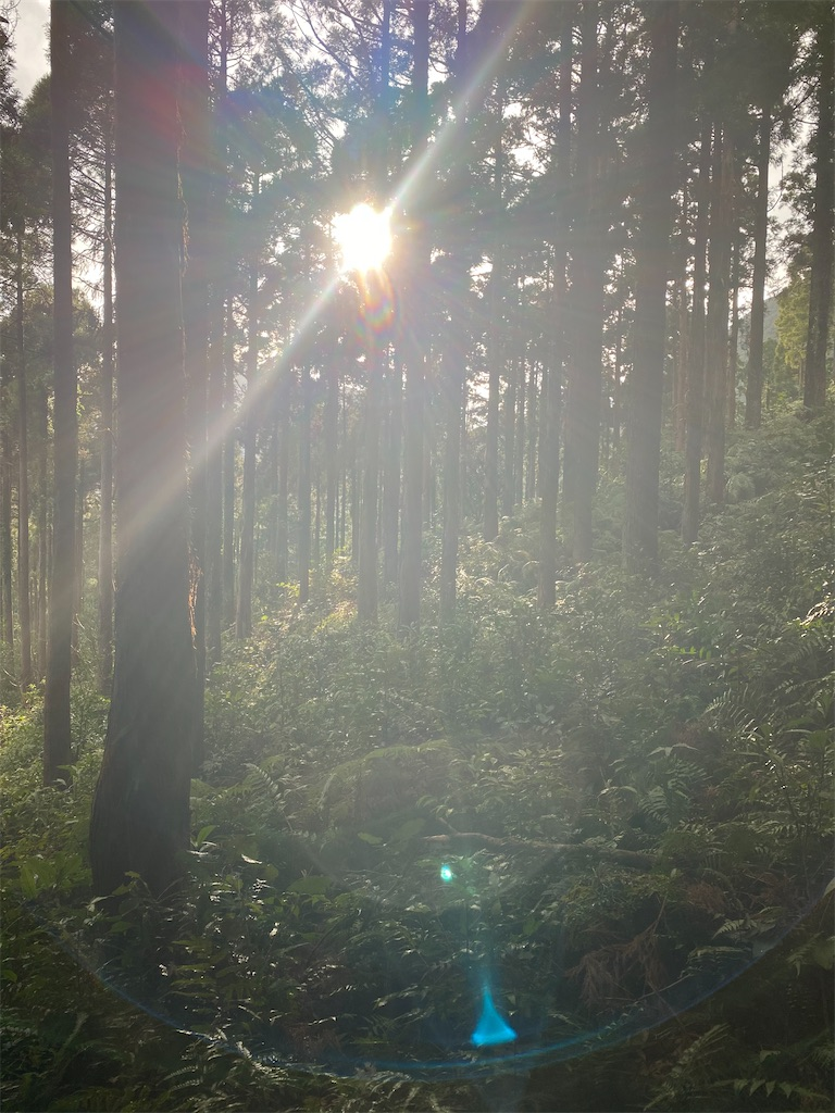 f:id:ayako-sundries:20210128220952j:image
