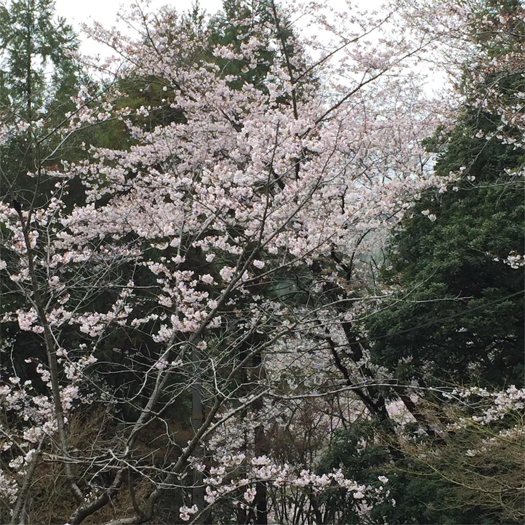 f:id:ayako312:20170410201343j:image