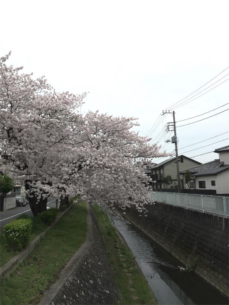 f:id:ayako312:20170413221839j:image