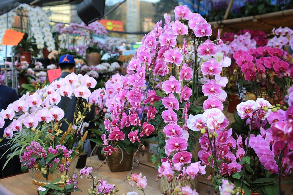 香港の旧正月イベントフラワーマーケットの写真