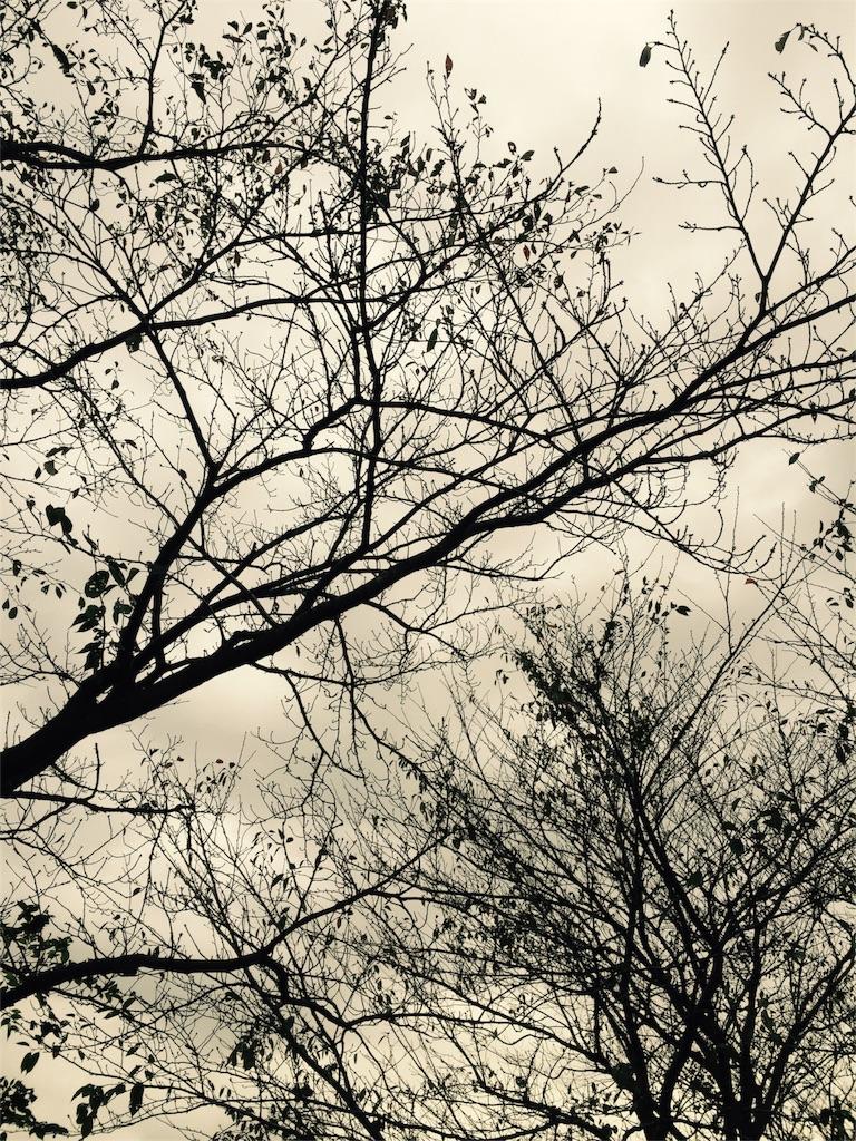 f:id:ayapone-1706:20161024084743j:image