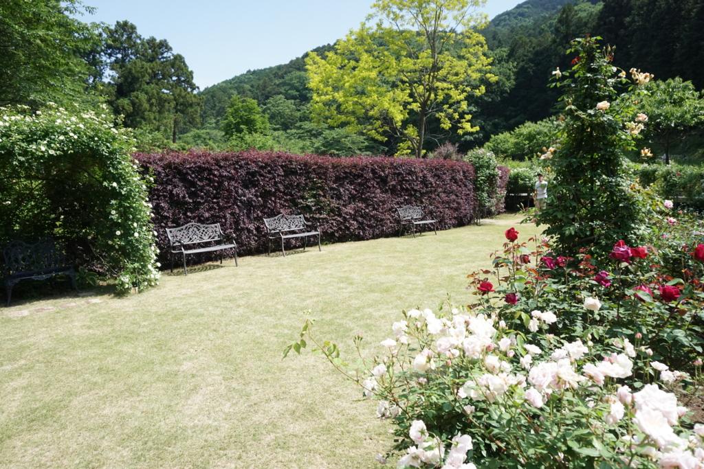 f:id:ayayuito_japan2012401:20170527222705j:plain