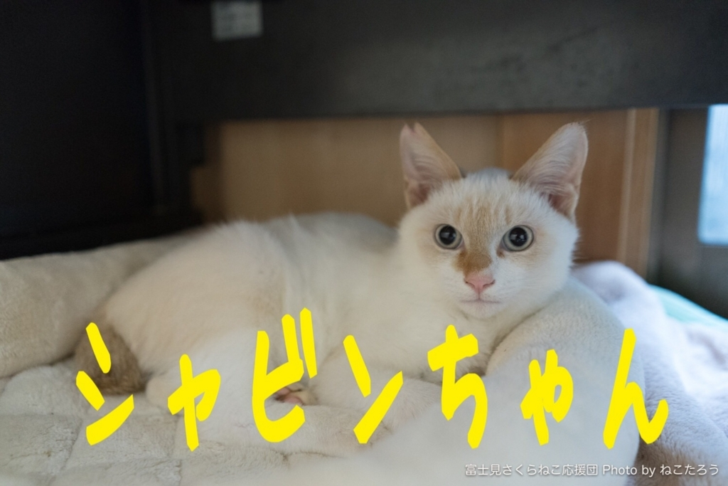 f:id:ayeyadana-d301:20171031010449j:plain