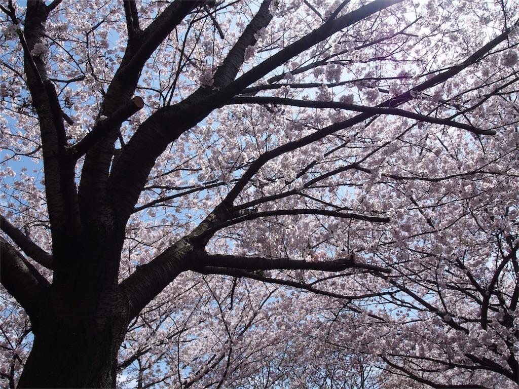 f:id:ayukasuzuki:20170413181804j:image