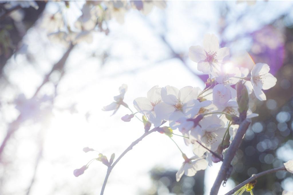 f:id:ayumi-zzz:20190307115502j:image