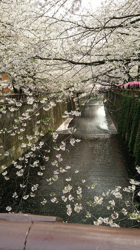 f:id:ayumihome:20160408112617j:image:w360