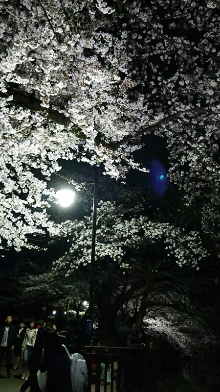 f:id:ayumihome:20160408113123j:image:w360