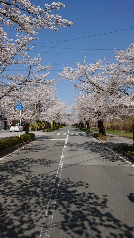 f:id:ayumihome:20180406101538j:image:w360