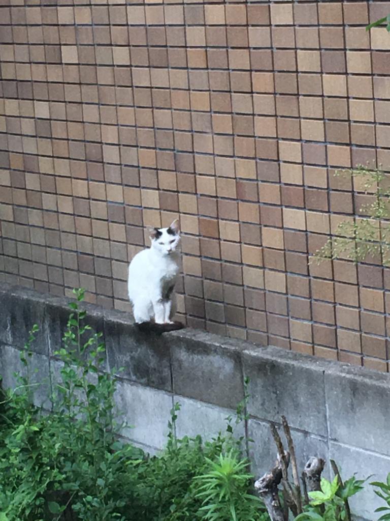 f:id:ayuminokuni:20170705002319j:plain
