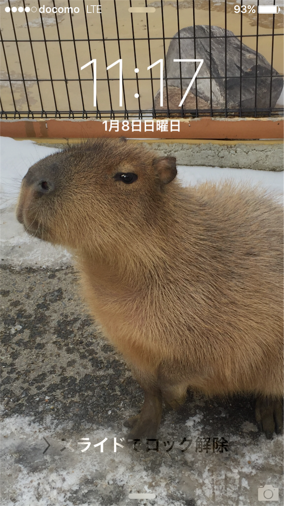 f:id:ayuumiii:20170108111823p:image