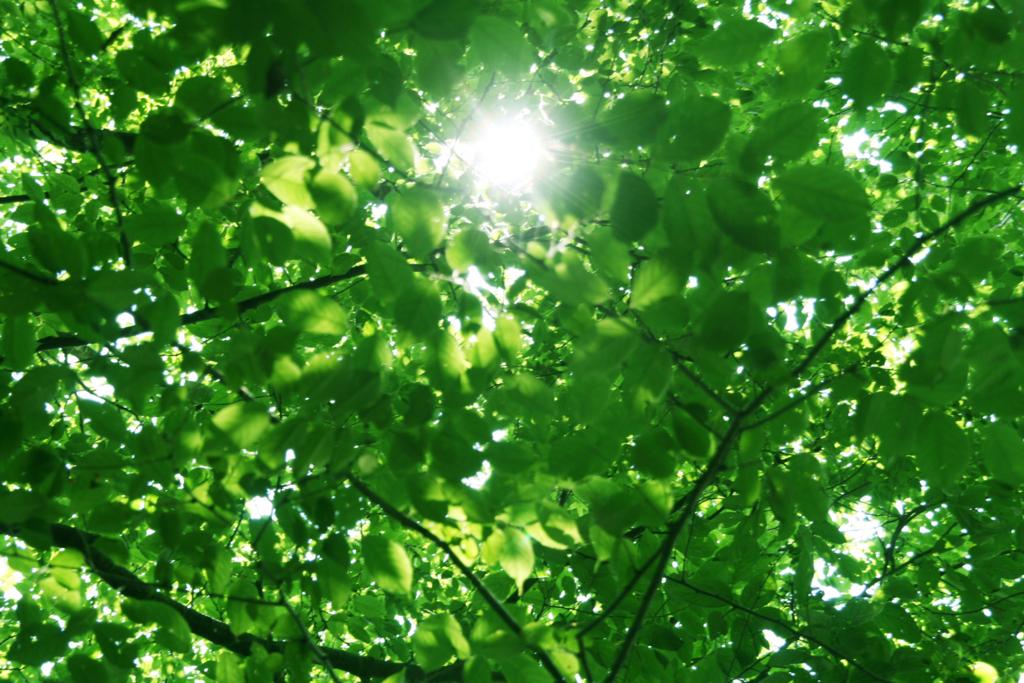 木漏れ日と森林