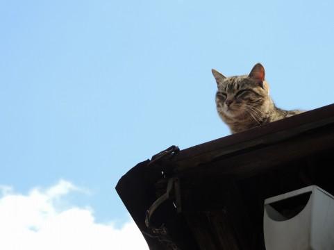 屋根の上でうとうとな猫