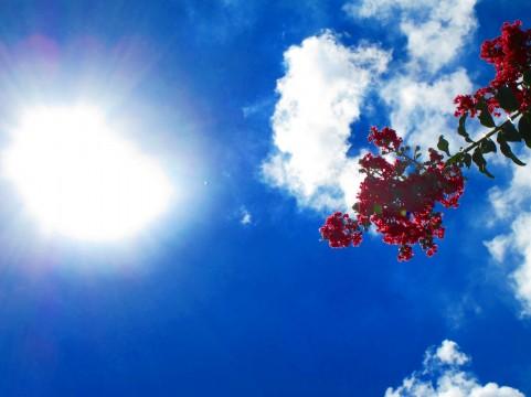 真夏の日差し・紫外線