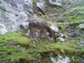 野生の鹿なぅ^q^