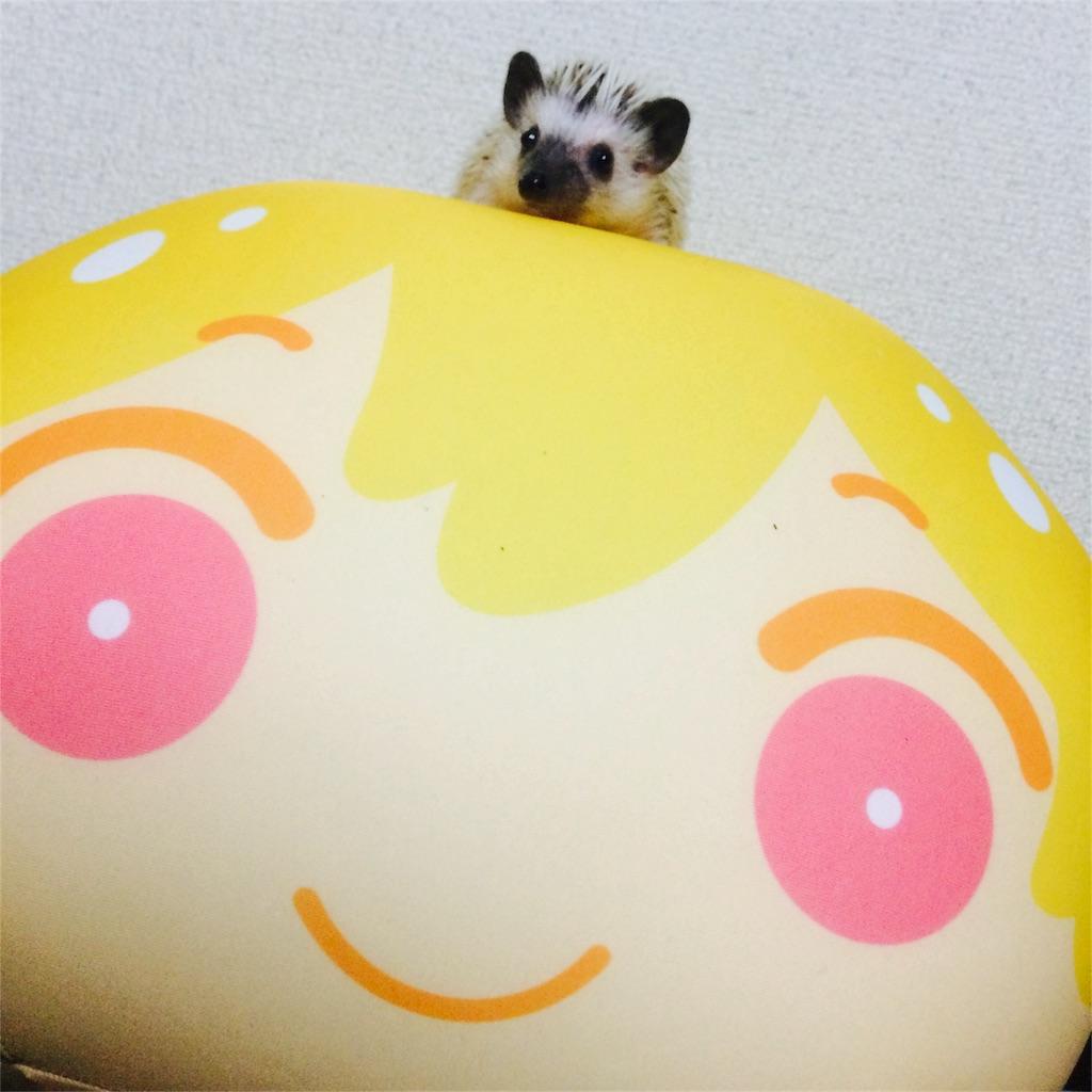 f:id:azukihog:20161115003738j:image