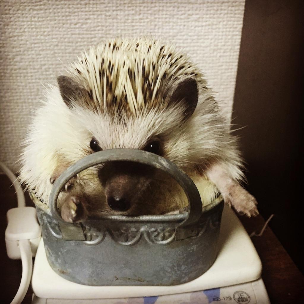 f:id:azukihog:20161202185007j:image