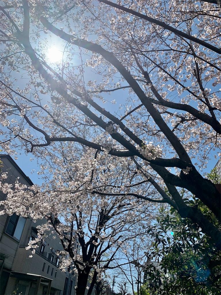 f:id:azuminakamura:20200414174811j:image