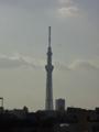 [東京スカイツリー][1日1スカイツリー]夏っぽい空