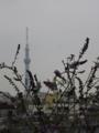[東京スカイツリー][1日1スカイツリー]@スカイツリー おめーの席ねーから