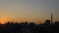 [東京スカイツリー][1日1スカイツリー]夕日を入れたかったために場所移動したり