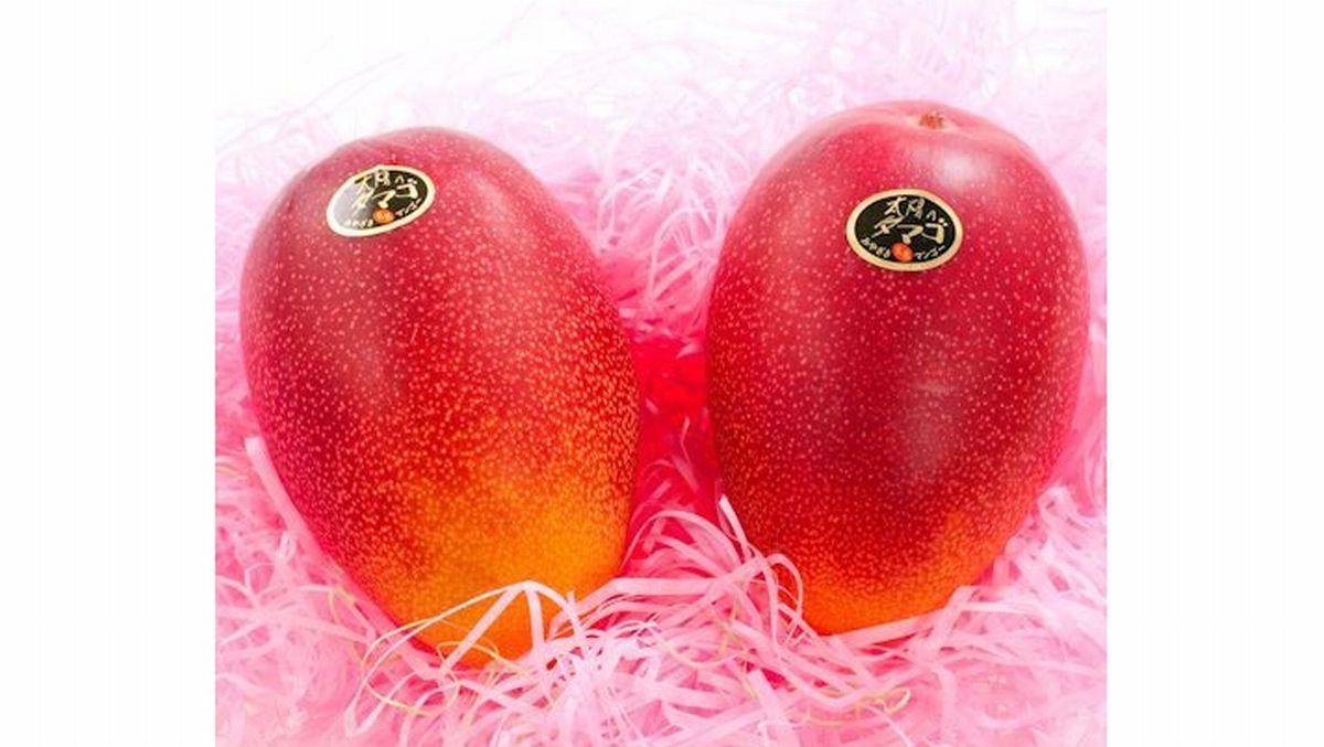 宮崎県産マンゴー太陽のタマゴを安い値段で購入する方法!比較してみた!