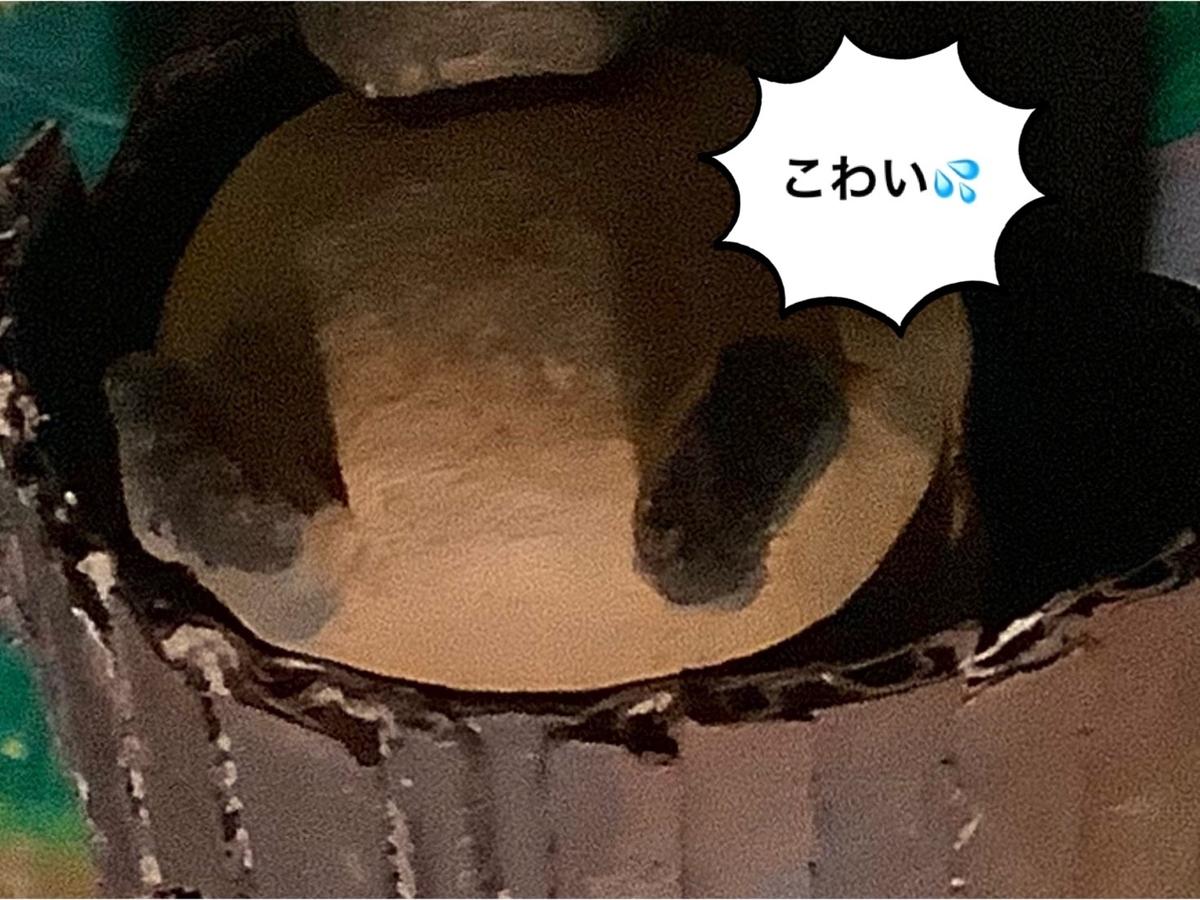 f:id:ba-chanblog:20210611114151j:plain